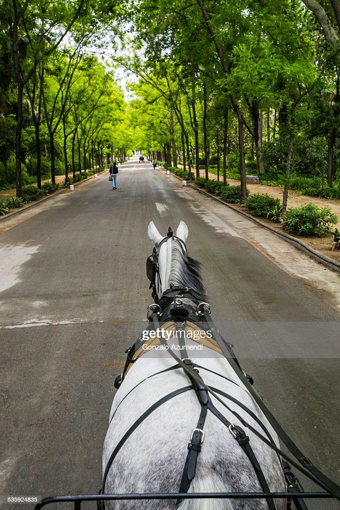 Maria Luisa Park in Seville. : Stock Photo