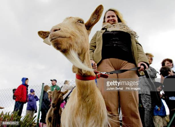 Marian Kelly from Dublin Community Growers with 'Maggie May' one of the three goats introduced onto Howth Head in Dublin as part of the 'Goat's for...