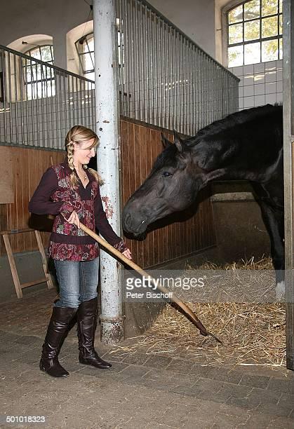 Marielle am Rande der ZDF'Herbstshow' Gestüt Warendorf NordrheinWestfalen Deutschland Europa Reiterhof Hof Pferd Tier Stall ausmisten Stroh Forke...