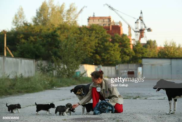 MarieLouise Chenery who is from San Diego California and is a volunteer with The Dogs of CHORNOBYL initiative tends to stray puppies near the...