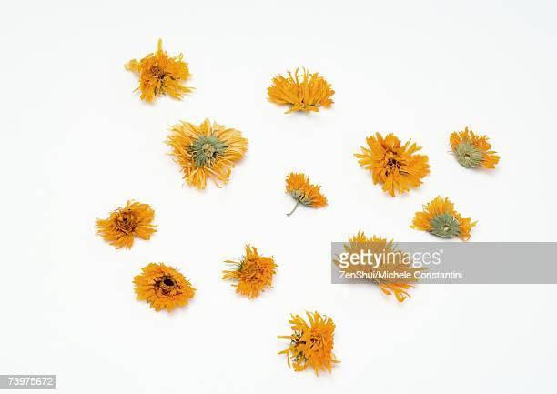 Marigold flower heads
