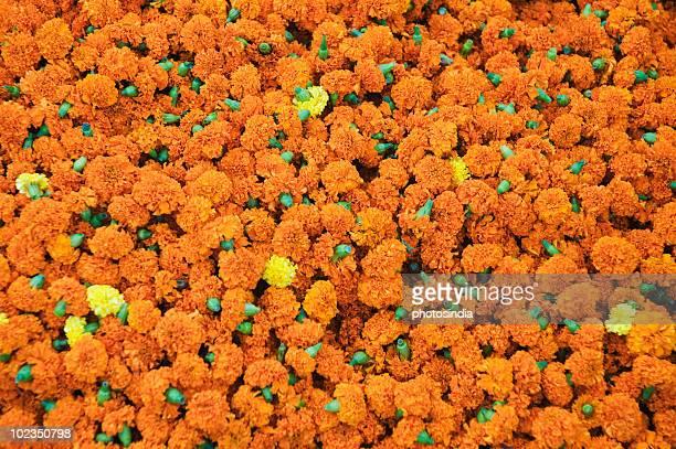 Marigolds for sale at flower market, Kolkata, West Bengal, India