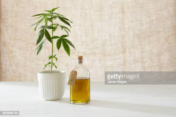 Marijuana plant with natural remedies