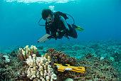 marine biologist studies the coral reef