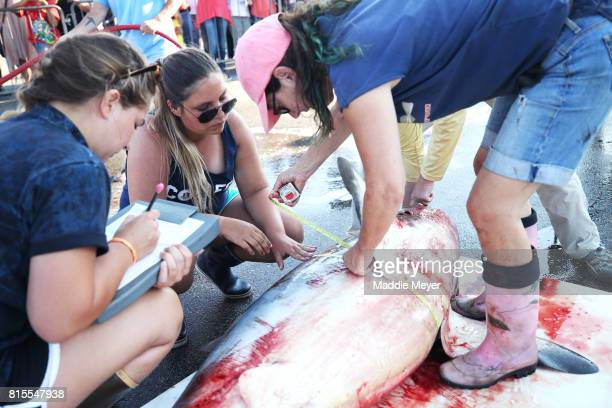 Marine biologists record measurements from a common thresher shark caught during the North Atlantic Monster Shark Tournament at State Pier 3 on July...