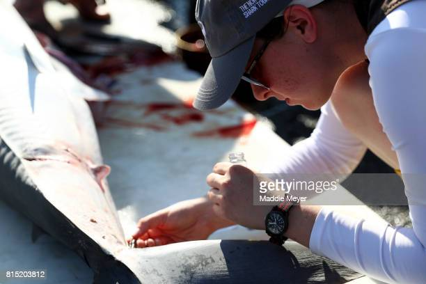 Marine biologists record measurements from a shortfin mako shark caught during the North Atlantic Monster Shark Tournament at State Pier 3 on July 15...