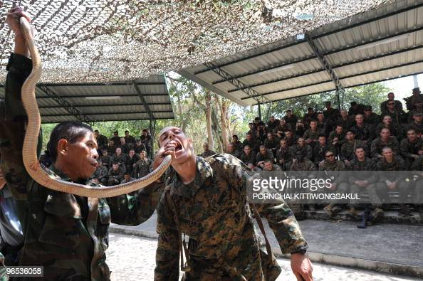 Marine drinks cobra blood as he participates in a jungle survive program as part of the annual combined military exercise Cobra Gold 2010 at a Navy...