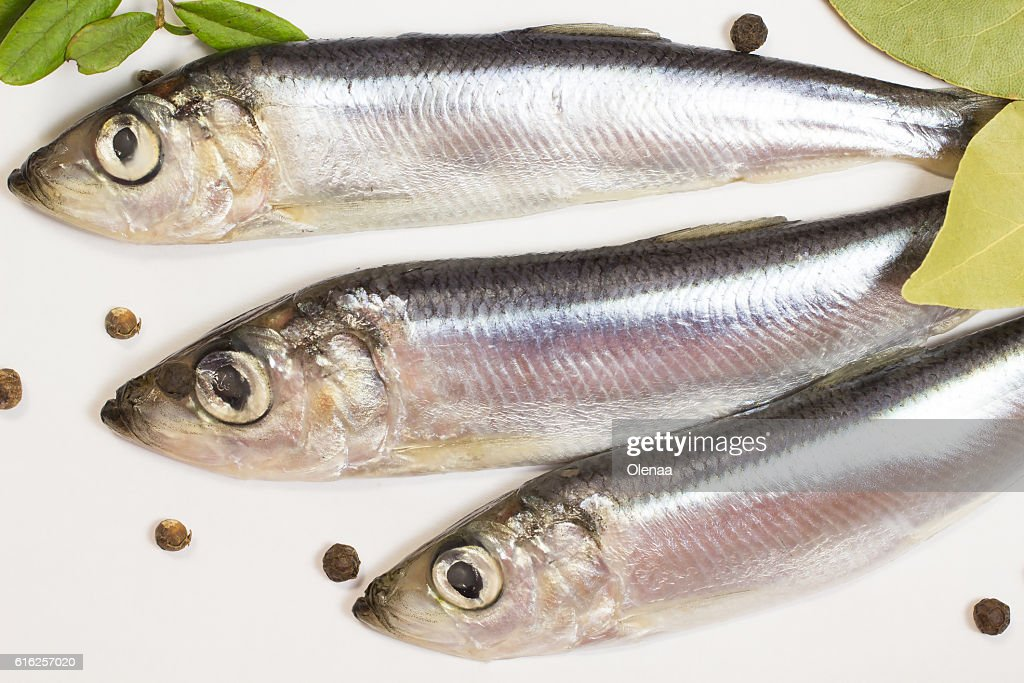 Marine fish herring on a white background : Stock Photo