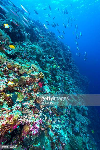 Vida marinha-Palau, Micronésia