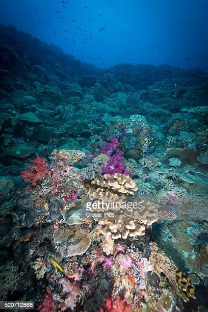 Vita marina-Palau, Micronesia :