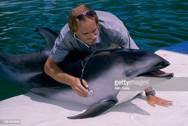 A marine pathologist Greg Bossart examines an Atlantic Dolphin at the Miami Seaquarium in March 1989 Bossart was helping US and Canadian scientists...