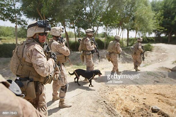 S Marines from 2nd Marine Expeditionary Brigade RCT 2nd Battalion 8th Marines Echo Co and a bomb sniffing dog manuever on a building they were taking...
