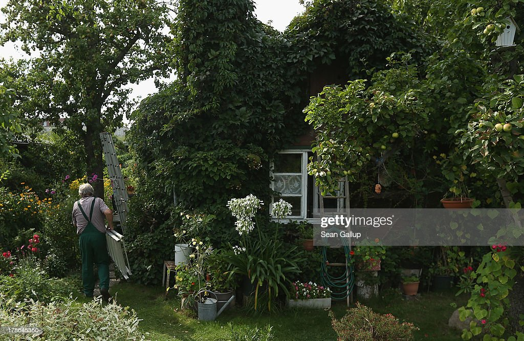 Mario carries a ladder past the ivy-covered cottage in the garden he and his wife Monika have leased for the last 30 years in the Oeynhausen Small Garden Association garden colony on August 29, 2013 in Berlin, Germany. At the Oeynhausen colony about 300 of its 438 gardens are currently threatened by real estate development, as are about another 24 colonies across the city. Berlin has about 900 garden colonies that are owned by the city and that provide urban dwellers who don't have land of their own the opportunity to maintain a garden and escape the stress of urban life. Berlin is currently undergoing a housing squeeze and city authorities are beginning to sell some of the colonies to developers, which has caused outrage in a city where the colonies of small gardens are a deep-seated tradition going back over a century.
