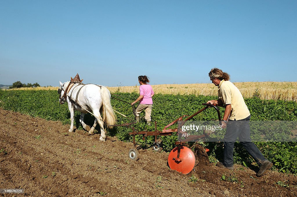 Marion Le Page and her partner use a disc plough, an environmentally friendly method, with the help of their horse on June 16, 2012, on their land nearby the French southwestern village of Sainte-Suzanne.