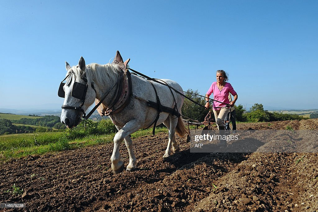 Marion Le Page and her partner use a disc plough, an environmentally friendly method, with the help of their horse on June 16, 2012, on their land nearby the French southwestern village of Sainte-Suzanne. AFP PHOTO / REMY GABALDA