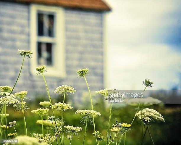 Maritime wildflowers