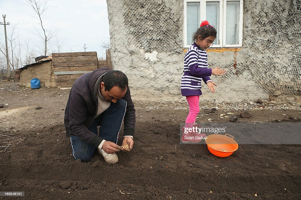 Marius Tanase, an ethnic Roma, and his daughter Denisa, 6, plant onions in their vegetable garden outside their home on March 11, 2013 in Dilga, Romania. Marius worked construction jobs in Spain and Great Britain and says he would like to move permanently to Great Britain, not because of the money but because he thinks his five children will have a better chance at a full education and brighter future than in Romania. Dilga is a settlement of 2,500 people with dirt roads and no running water, and unemployment is at 70%. Most of the working-age men and women have at some point worked abroad, mostly in Italy or Great Britain, as many say they are unable to find adequate work in Romania. Romania's Roma belong to a myriad of different tribes defined by their craft, and Dilga's belong to a group called the Rudari, who until the 1930s specialised in woodcrafts. During the communist years most worked in nearby state-run factories and agricultural cooperatives, though the majority of these went bankrupt after 1989 and the local Roma lost their jobs. Since then they have struggled to make ends meet and find a better future for their children, though projects initiated by the European Union and NGOs are helping some to launch small-scale enterprises and improve their children's education.