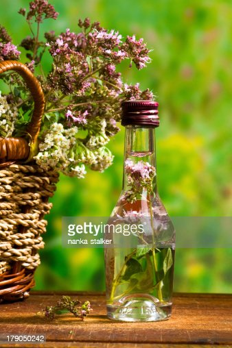 marjoram : Stock Photo