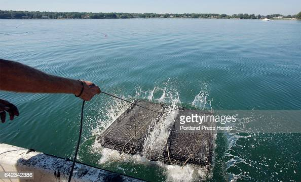 Mark Green lets out rope attached to a cage of oyster seeds just tossed into the water off the coast of Yarmouth on September 17 2015 Green operates...