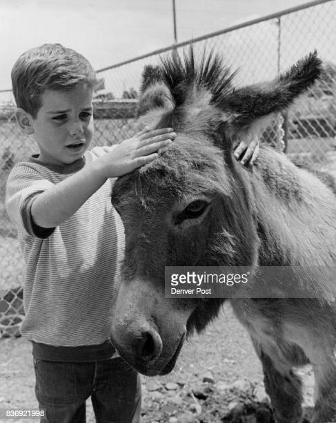 Mark Luckinbill Pets Head Of Pat The Burro At Englewood Lion's Petting Zoo In Belleview Park Credit Denver Post