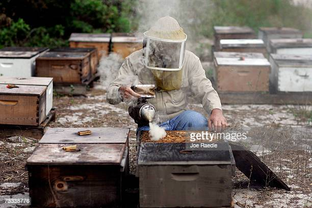 Mark McCoy works with his honey bees on February 15 2007 in Loxahatchee Florida There is concern among beekeepers and researchers about a recent...