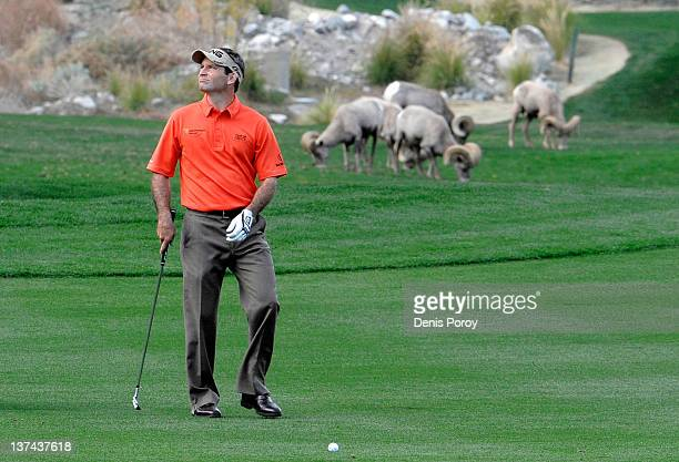 Mark Wilson lines up his second shot next to a herd of bighorn sheep on the 16th hole at the Palmer Private Course at the PGA West during the second...