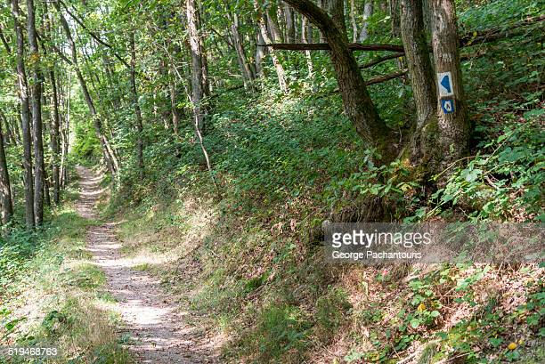 Marked hiking path in the forests of Luxembourg