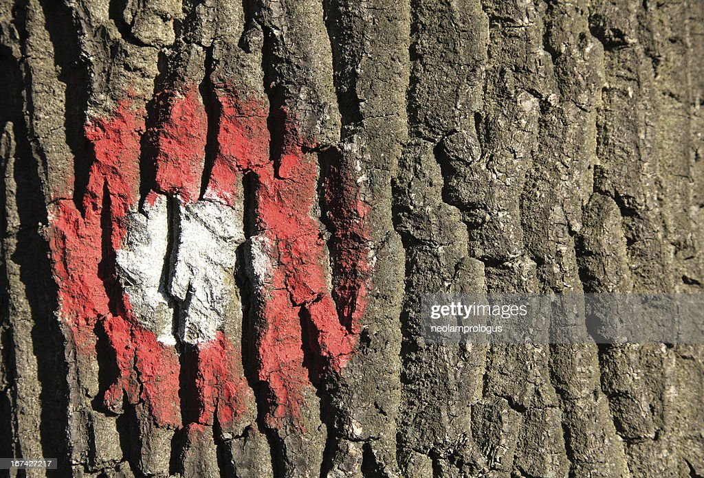 marked tree : Stock Photo