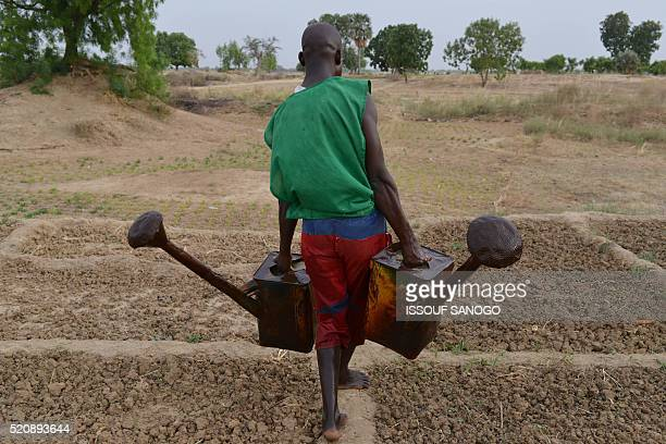 TOPSHOT A market gardener carries watering cans to water salad greens near N'Djamena on April 12 2016 / AFP / ISSOUF SANOGO