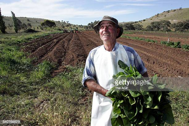 Market gardener Francesco Scappino growing spinach on the river flats of the Maribyrnong river at Keilor on 10 October 2006 THE AGE NEWS Picture by...