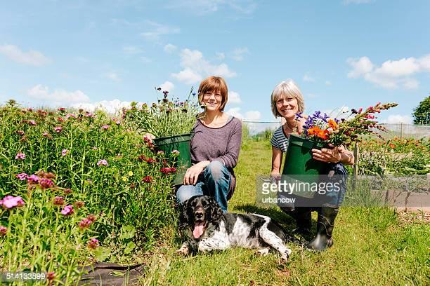Market gardening, flowers