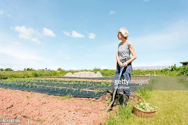 Mercato di giardinaggio