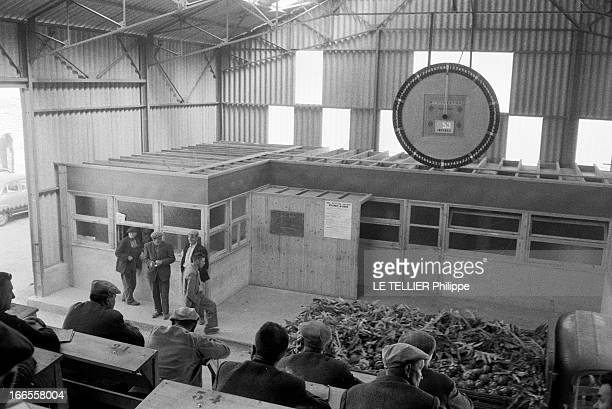 Market Of Saint Pol De Leon In Britain Bretagne le 28 juin 1961 le marché de SaintPoldeLéon les agriculteurs de dos assis dans les tribunes pendant...