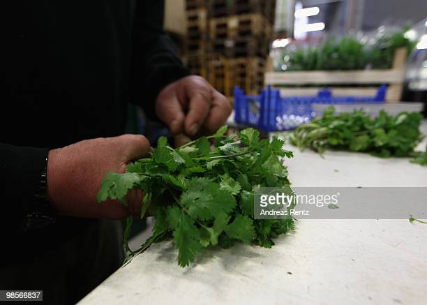 A market supplier controlls coriander herbage at the central market on April 20 2010 in Berlin Germany Imports of foreign foods such as Israeli...