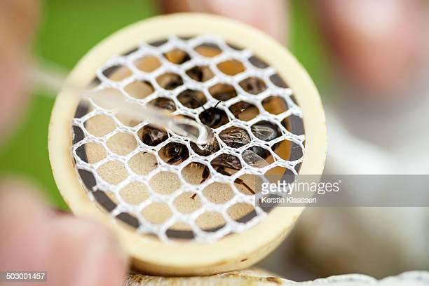 Marking a bee queen