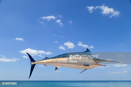 Marlin - Swordfish,Sailfish saltwater fish (Istiophorus) isolate : Stock Photo