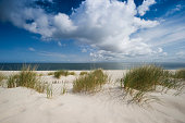 Marram grass on the beach, List, Sylt island, Schleswig-Holstein, Germany, Europe