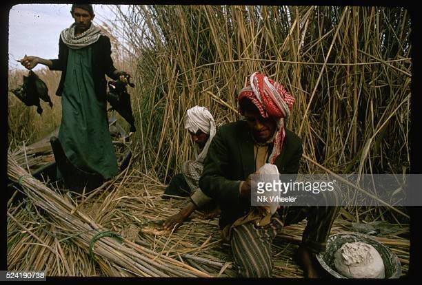 A Marsh Arab man prepares dough for baking Iraq   Location The Marshes near Nasiriya Iraq