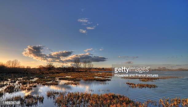 Marsh at Arles