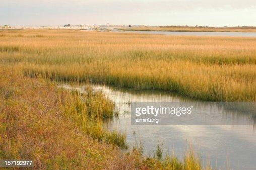 Marsh at Chincoteague Island