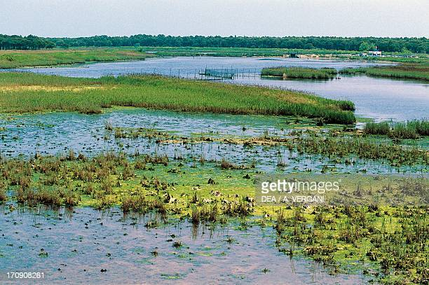 Marsh in the Po delta Po Delta Regional Park EmiliaRomagna Italy