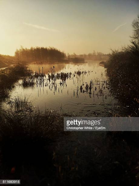 Marsh lanscape at sunset