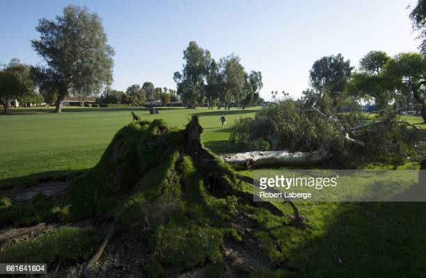 A marshal walks by a fallen tree on the ninth fairway before the start of the delayed round one of the ANA Inspiration on the Dinah Shore Tournament...