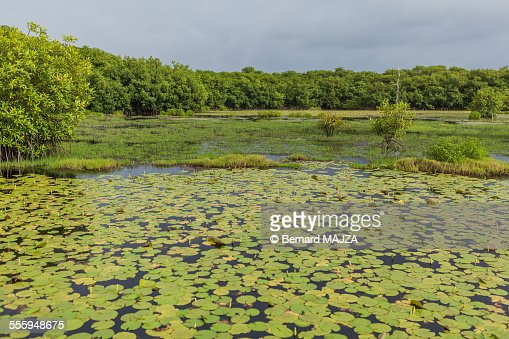 Marshes in French Guiana