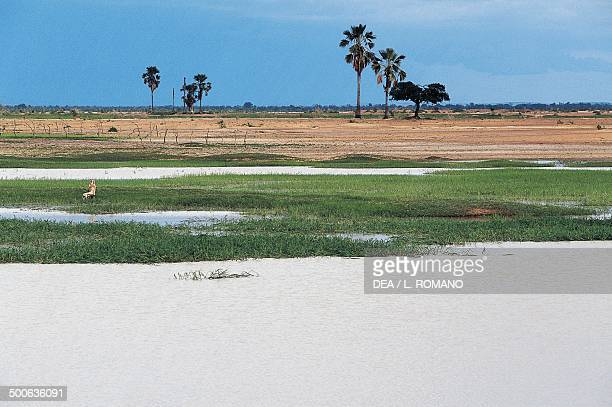 Marshes in the Niger river delta Mali
