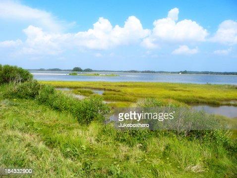 Marshland in Summer