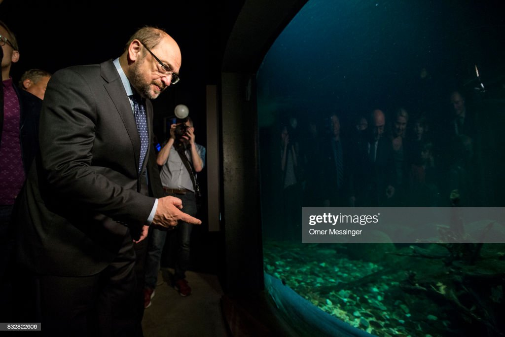 Martin Schulz, chancellor candidate of the German Social Democrats (SPD), is seen looking at a fish tank as part of a tour at the Ozeanum (aquarium) in the German city of Stralsund, during an election campaign stop on August 16, 2017 in Stralsund, Germany. Germany is scheduled to hold federal elections on September 24 and Schulz is currently approximately 14 points behind his rival, German Christian Democrat (CDU) and current German Chancellor Angela Merkel, who is seeking a fourth term as chancellor.
