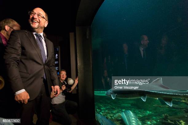 Martin Schulz chancellor candidate of the German Social Democrats is seen looking at a fish tank as part of a tour at the Ozeanum in the German city...
