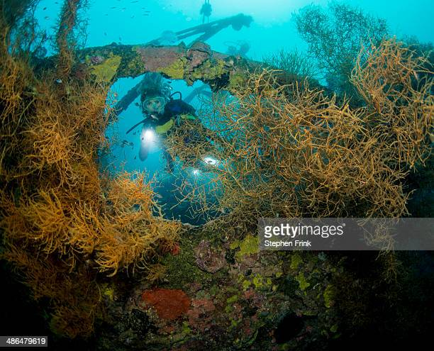 Maru shipwreck, Marovo Lagoon