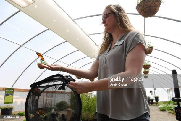 Mary Ann Colley Butterfly Pavilion vice president of science and conservation releases butterflies at the Butterfly Pavilion and Denver Botanic...